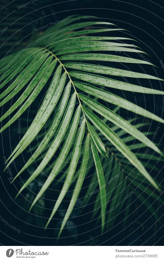 Leaf of a palm tree with drops of water Nature Design Plant Palm tree Palm frond Foliage plant Tropical Botanical gardens Greenhouse Drops of water Colour photo