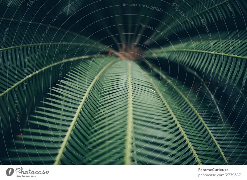Leaves of afar Nature Structures and shapes Fern Pteridopsida Fern leaf Foliage plant Green Plant Botanical gardens Greenhouse Pattern Leaf Colour photo