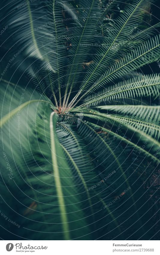 Leaves of afar Nature Green Pattern Structures and shapes Fern Pteridopsida Fern leaf Foliage plant Greenhouse Botanical gardens Botany Colour photo