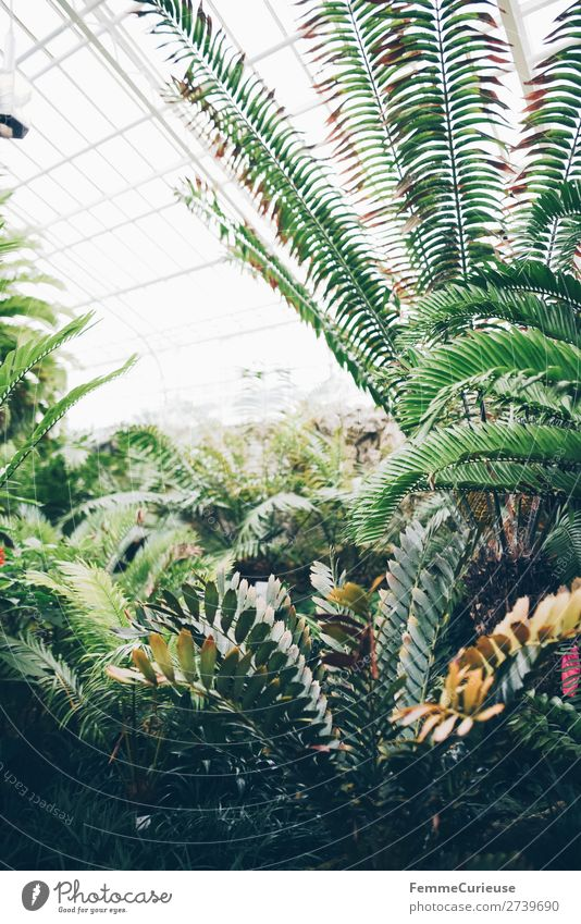 Green plants in greenhouse with glass roof Nature Fern Foliage plant Botanical gardens Botany Greenhouse Glass roof Bright Day Part of the plant Colour photo
