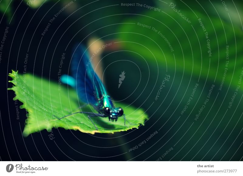 libella Animal Dragonfly 1 Blue Green Spring fever Pride Nature Insect Close-up Wing Multicoloured Exterior shot