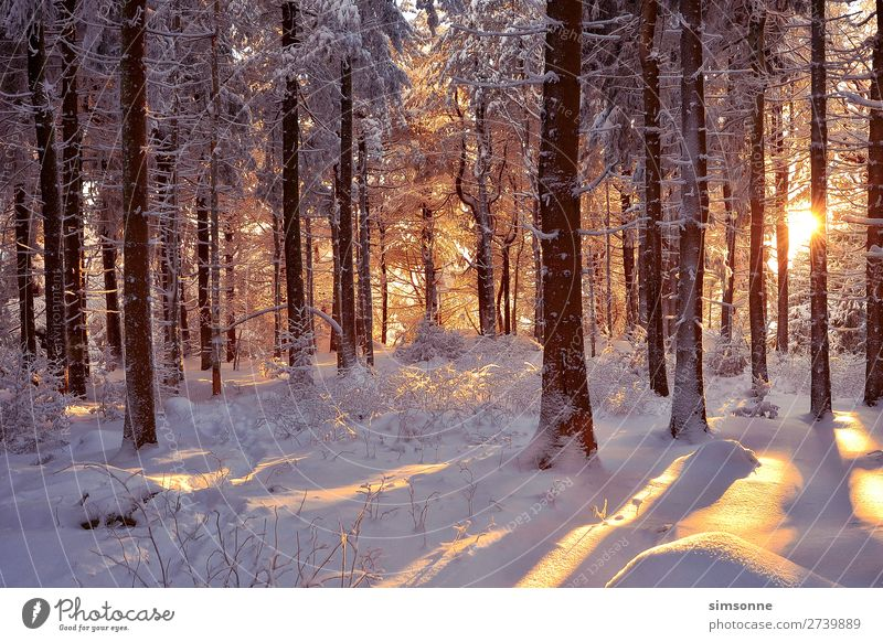 Romantic winter forest snow-covered trees Sun Winter Snow Christmas & Advent Landscape Fog Snowfall Tree Forest Lanes & trails Cold Soft Idyll Target Snowscape