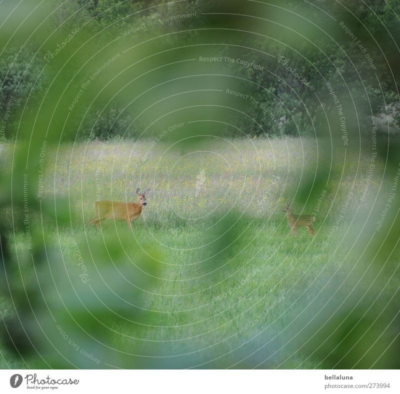 tensioner perspective Environment Nature Plant Grass Bushes Leaf Foliage plant Wild plant Meadow Field Forest Animal Wild animal 2 Baby animal Animal family