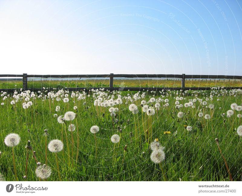 Nature Flower Green Meadow Grass Garden Landscape Graffiti Field Dandelion Fence Blue sky