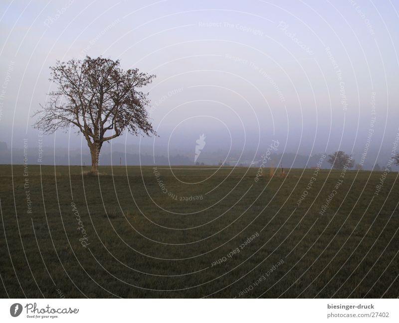 fog tree Tree Fog Loneliness Grief Meadow Landscape