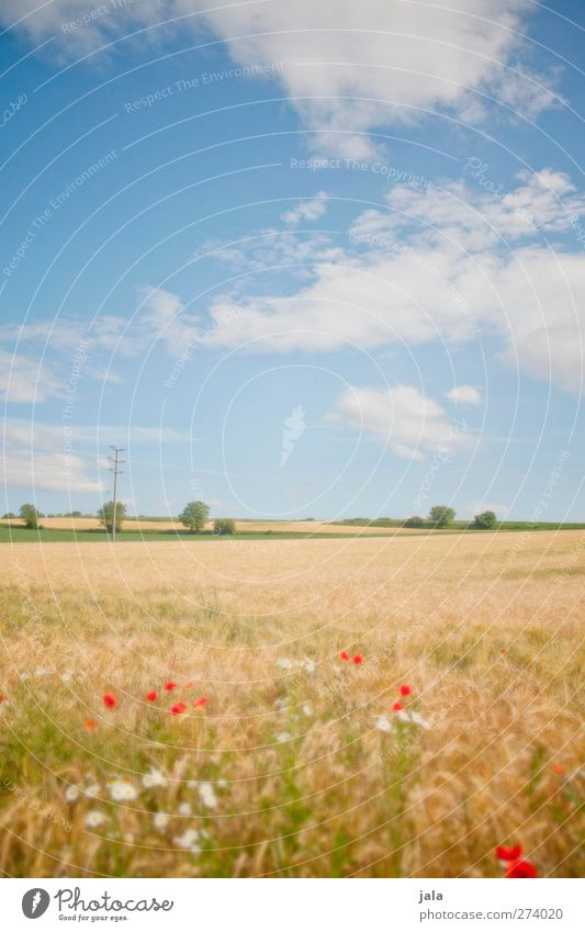 days like this. Environment Nature Landscape Plant Sky Clouds Summer Beautiful weather Tree Grass Foliage plant Agricultural crop Field Natural Blue Yellow
