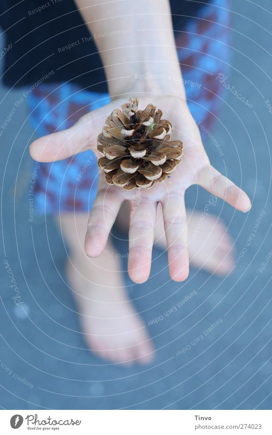 conical summer Child Hand Fingers 1 Human being Summer Beautiful weather Blue Brown Black Cone Part of the plant Open Shorts Children`s hand cold colours