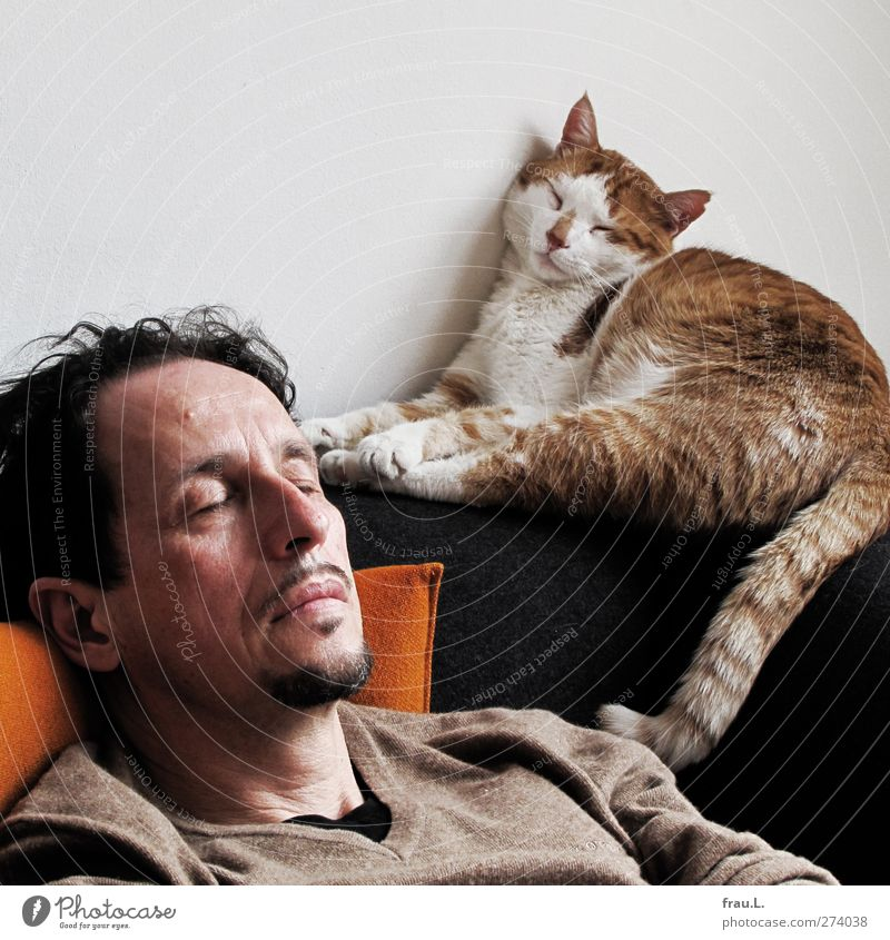 sleeper Living or residing Friendship Head 1 Human being 45 - 60 years Adults Animal Pet Cat Sleep Dream Together Brown Contentment Trust Safety (feeling of)