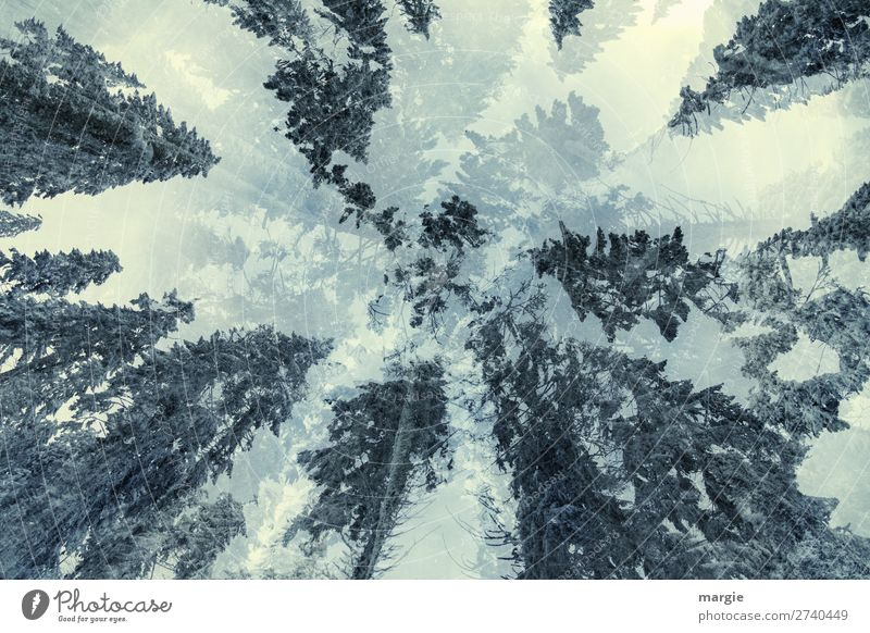 Sky Vacation & Travel Nature Plant Green White Tree Animal Forest Winter Environment Snow Freedom Trip Hiking Ice
