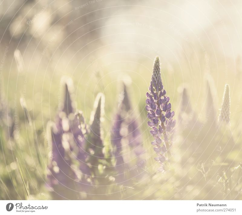 Nature Green Beautiful Summer Plant Loneliness Animal Environment Love Meadow Freedom Blossom Field Gold Glittering Esthetic