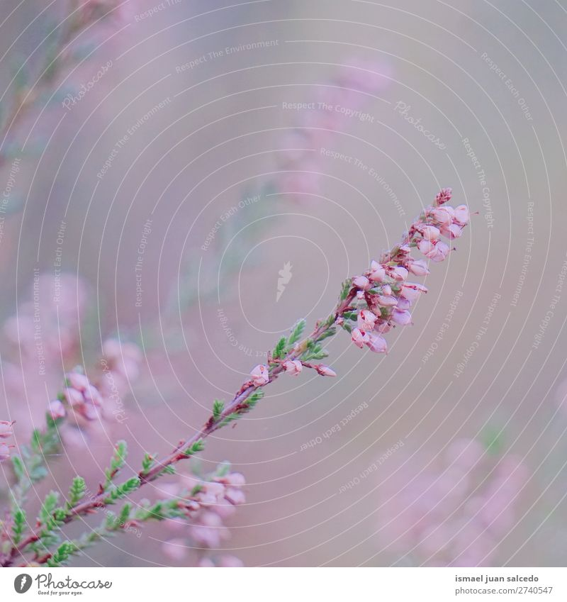pink flowers Nature Summer Plant Flower Winter Autumn Garden Pink Decoration Beauty Photography Blossom leave Floral