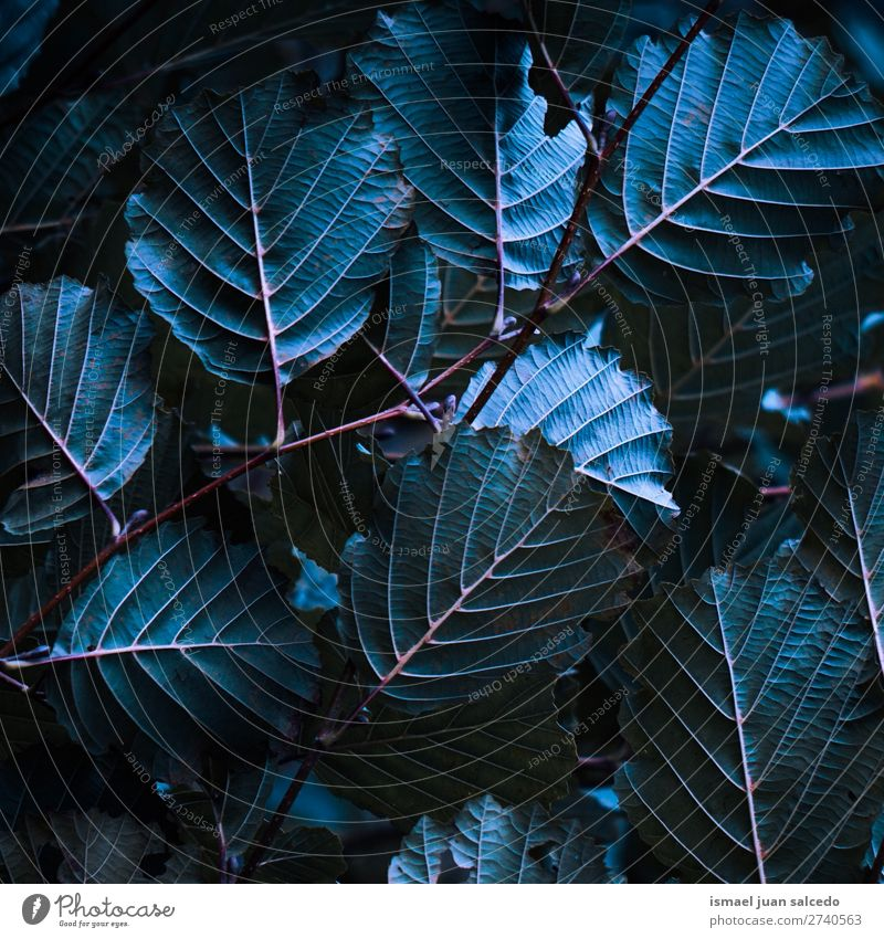 plant leaves texture Plant Leaf Blue Garden Floral Nature Decoration Abstract Consistency Fresh Exterior shot background Beauty Photography fragility spring