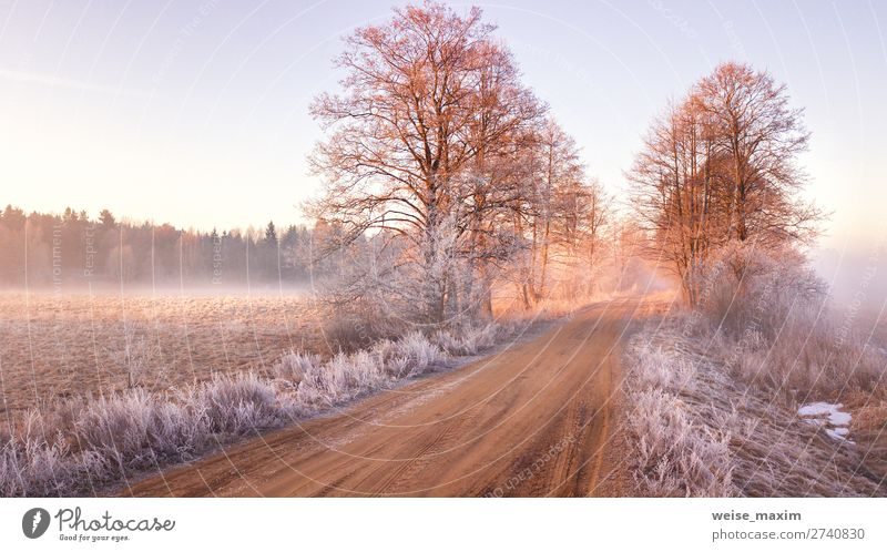 View of frozen road in early spring. Misty morning Sky Vacation & Travel Nature Beautiful White Landscape Red Tree Forest Winter Far-off places Street Spring