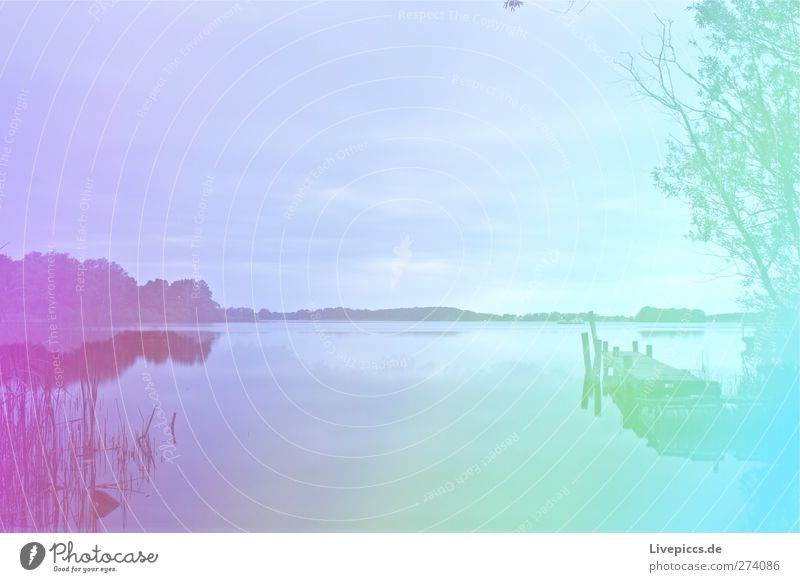 colorful Müritz Art Artist Painter Environment Nature Landscape Water Sky Clouds Summer Weather Plant Tree Grass Bushes Wild plant Lakeside Beach Bay Illuminate
