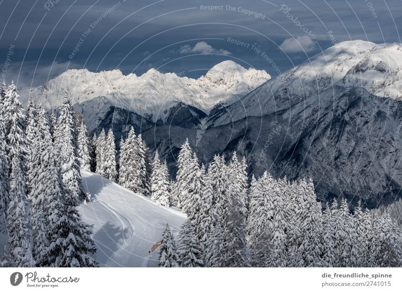 Winter in Tyrol Environment Nature Landscape Plant Sky Clouds Weather Beautiful weather Wind Ice Frost Snow Tree Coniferous trees Alps Mountain Patscherkofel