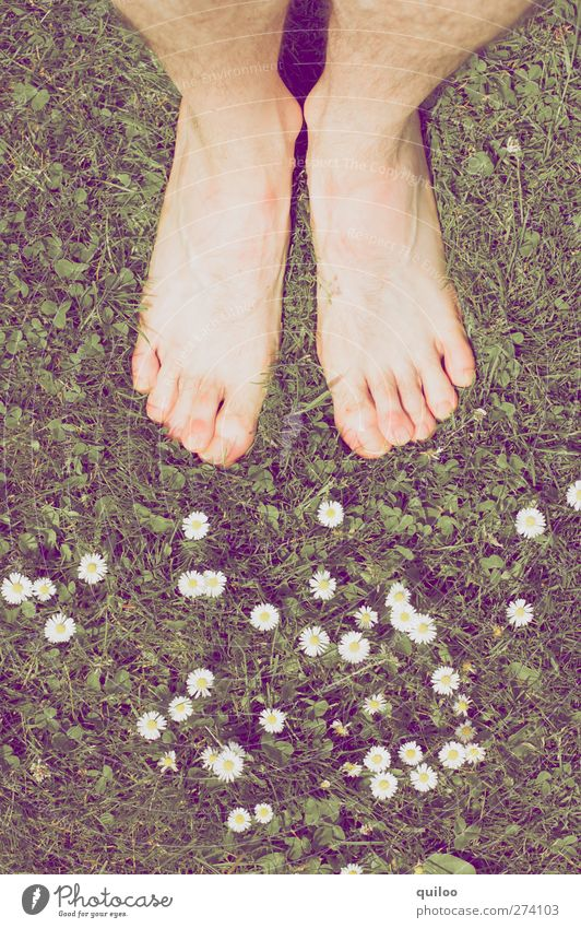 summer feet Masculine Skin Legs Feet Plant Grass Daisy Meadow Stand Wait Naked Warm-heartedness Calm Dream Emotions Contentment Equal Ease Perspective Barefoot