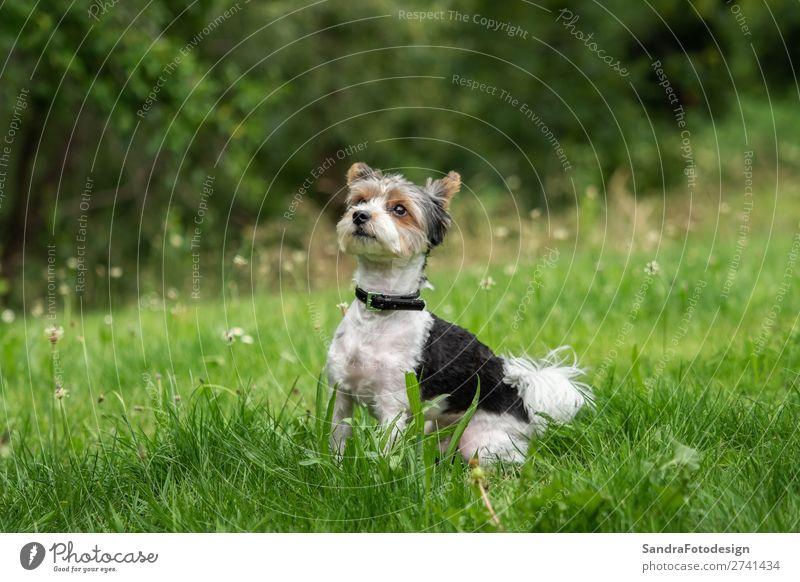 Dog Animal Love Meadow Garden Park Love of animals Terrier