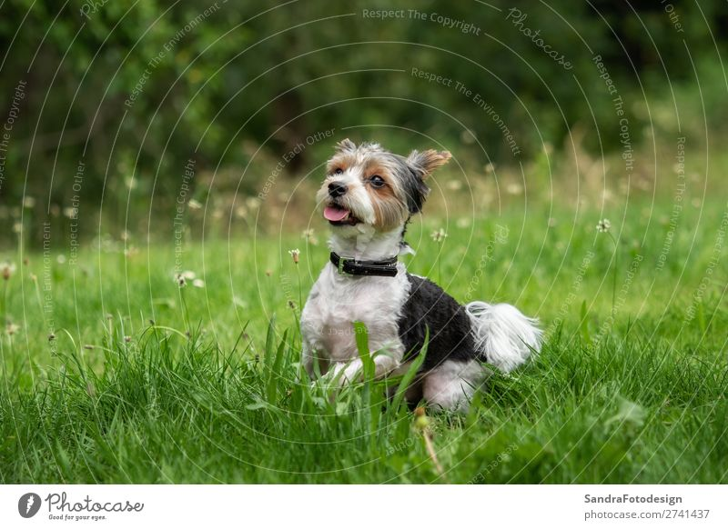 A little terrier with short hair out in the meadow Garden Park Meadow Animal Dog 1 Love Love of animals adorable adorable animal Animal Themes beautiful breed