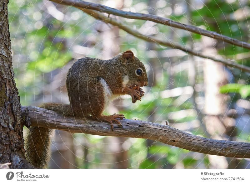 Squirrel / Squirrel Environment Nature Animal Wild animal Calm Cute Rodent Forest animal Colour photo Exterior shot Deserted Day Light Shadow