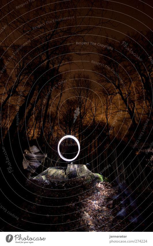 Nature White Black Forest Dark Lanes & trails Lighting Orange Circle Mysterious Spooky Incandescent Tree stump Starlit City light