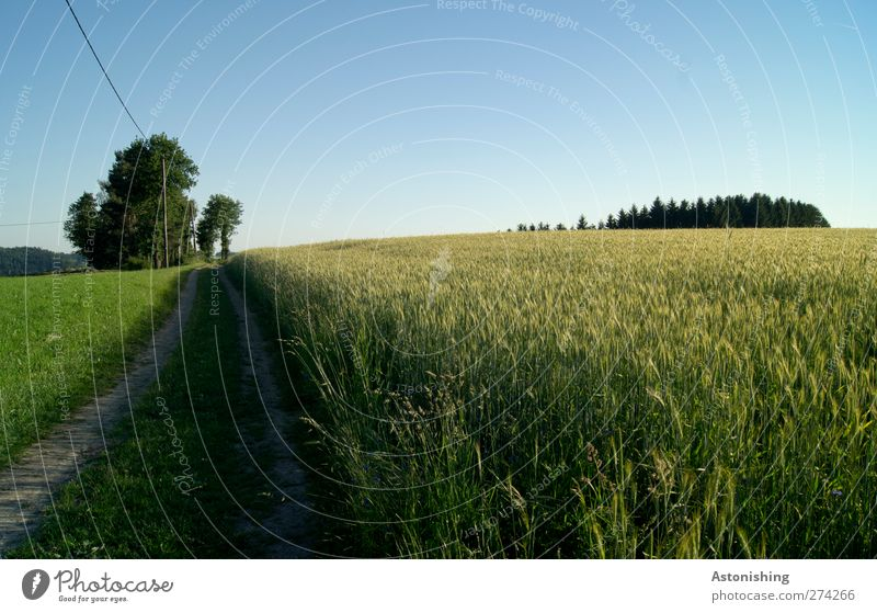 Sky Nature Blue Green Tree Plant Summer Flower Forest Environment Landscape Meadow Grass Lanes & trails Sand Horizon
