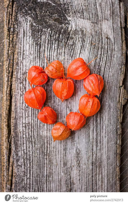 Heart shape made of red Physalis on grey wood Nature Plant Spring Summer Autumn Climate change Agricultural crop Kitsch Odds and ends Wood Sign Joy Happy