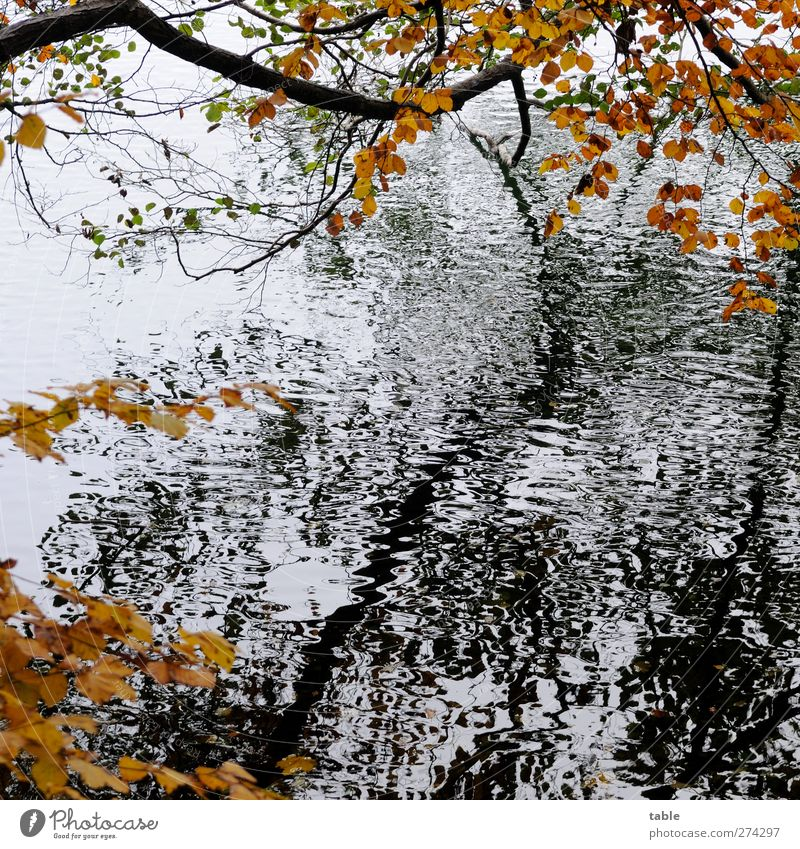 Nature Water White Tree Plant Black Calm Forest Environment Landscape Dark Autumn Movement Wood Lake Brown