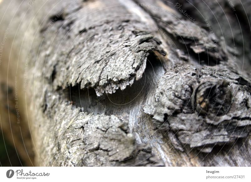 Old Wood Gray Branch Derelict Tree trunk Individual Tree bark Wood grain