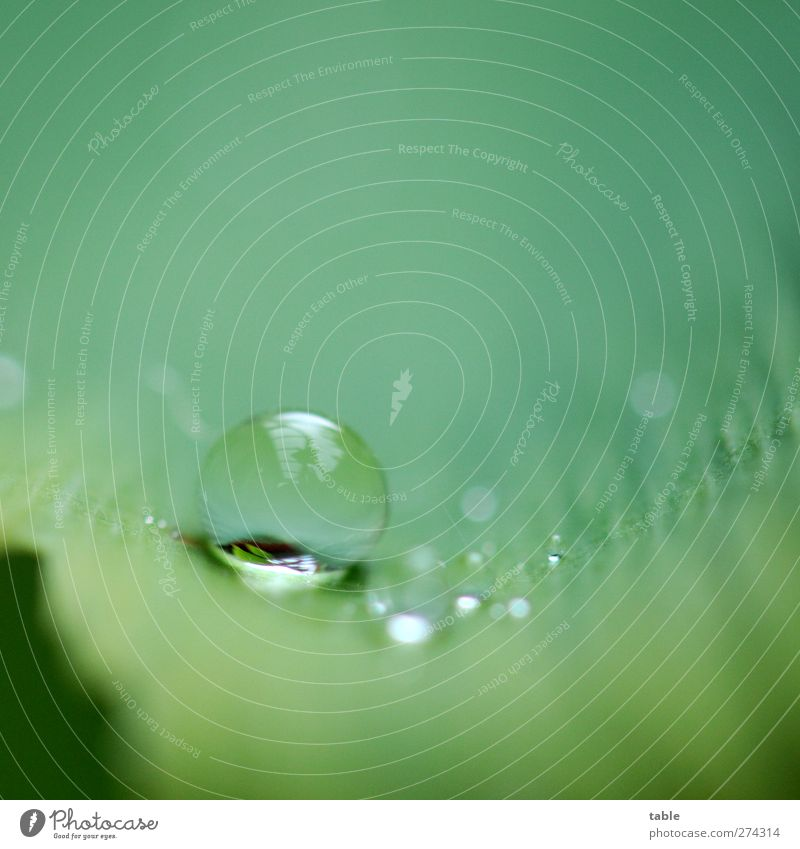 rain Nature Plant Elements Water Drops of water Rain Tree Leaf Foliage plant Agricultural crop Wild plant Exotic Ginko Glittering Lie Fresh Round Green