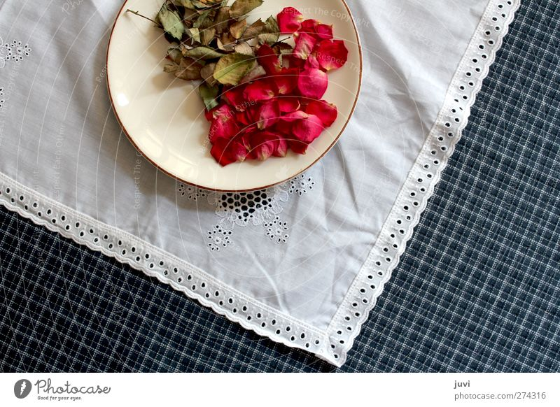 Flowers served on a plate Plant Rose Leaf Blossom Decoration Dry Blue Green Red White Dried flower Plate Lace Checkered Tablecloth Colour photo Interior shot