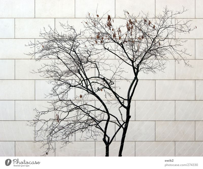 Nature White City Tree Plant Black Wall (building) Wood Gray Wall (barrier) Stone Building Sadness Line Facade Modern