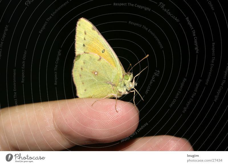 Green Yellow Fingers Near Butterfly Feeler Welcome Bright green Lemon yellow