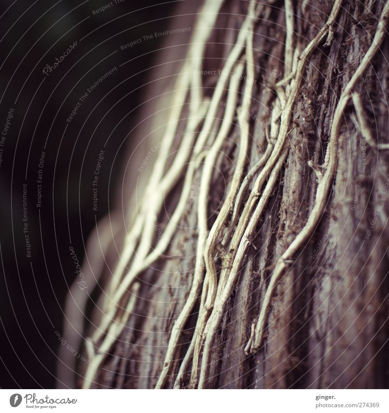 Nature Tree Plant Environment Death Line Brown Dry Tree bark Beige Stick Delicate Tendril Wiggly line Part of the plant Thread-like