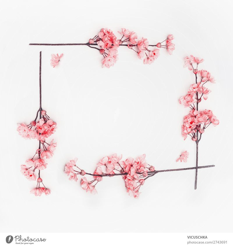 Pink spring flowers frame on white Style Design Summer Decoration Spring Blossom Background picture Composing Cherry blossom Frame Bright background