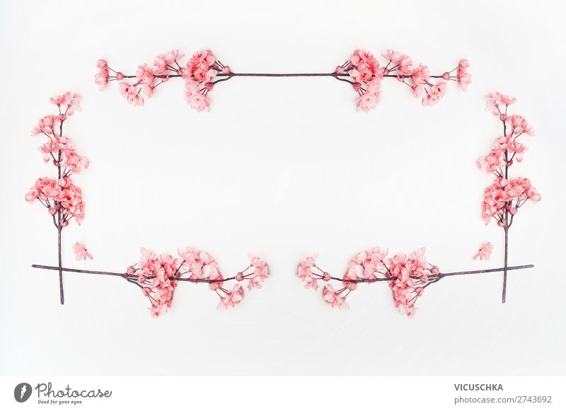Pink flower frame on white Style Design Decoration Feasts & Celebrations Nature Plant Spring Summer Blossom Hip & trendy Background picture Composing