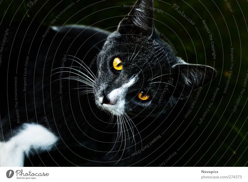 Cat Animal Yellow Dark Gray Pet Mammal Domestic cat Whisker