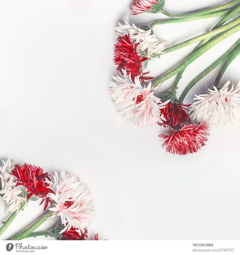 Nature Summer Plant White Red Flower Background picture Style Design Decoration Bouquet Hip & trendy Conceptual design Valentine's Day Hipster Blog