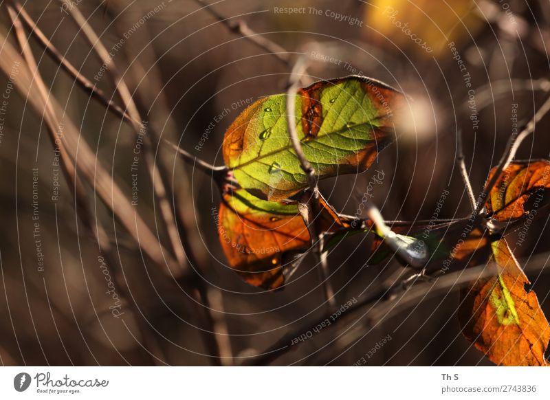 Nature Plant Colour Green Leaf Calm Forest Winter Autumn Natural Orange Brown Elegant Esthetic Authentic Uniqueness