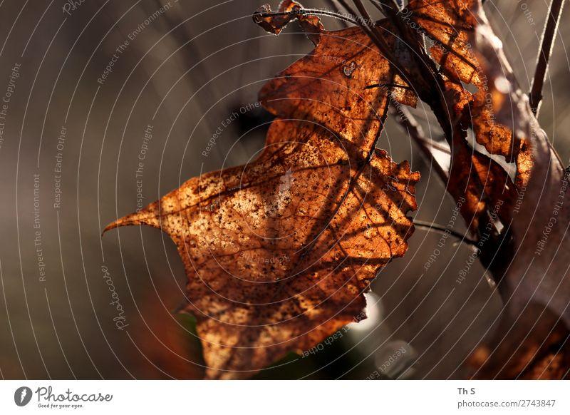 Nature Plant Leaf Calm Forest Winter Autumn Natural Brown Elegant Esthetic Authentic Uniqueness Simple Serene Patient