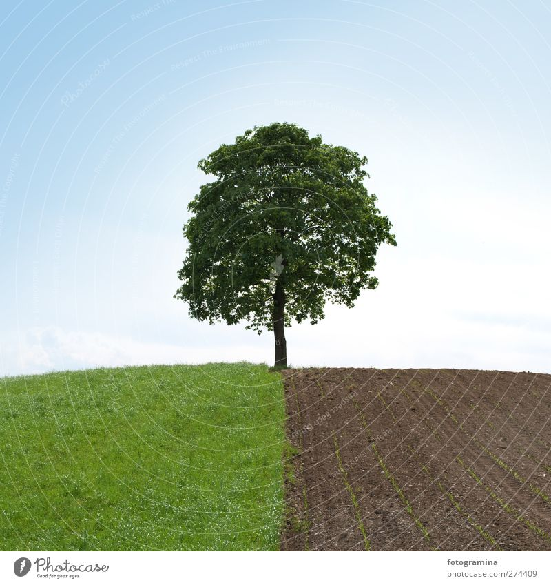 halfway Nature Landscape Plant Sky Cloudless sky Spring Tree Field Hill Power Loneliness Half Colour photo Exterior shot Copy Space top Day