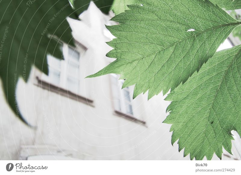 Old White Green City Plant Loneliness Leaf House (Residential Structure) Window Cold Wall (building) Spring Gray Wall (barrier) Building Bright