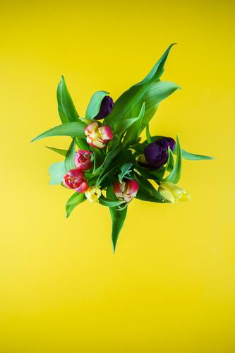 Plant Green Flower Yellow Spring Natural Wild Bouquet Tulip Donate Faded Colour palette Spring flower Spring day Tulip blossom Tulip bud