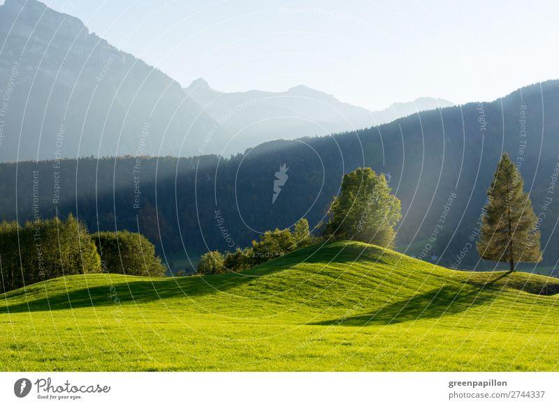 Bregenzer Wald - Shadow plays Environment Nature Landscape Sunlight Spring Summer Autumn Tree Grass Meadow Hill Alps Mountain Peak bizau Bezau Austria
