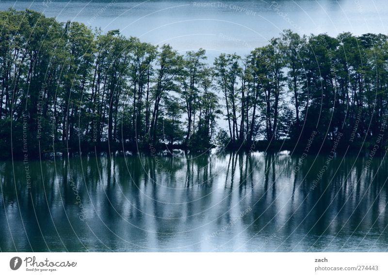 Nature Blue Water Green Tree Plant Forest Environment Landscape Dark Lake Line Lakeside Pond Row of trees