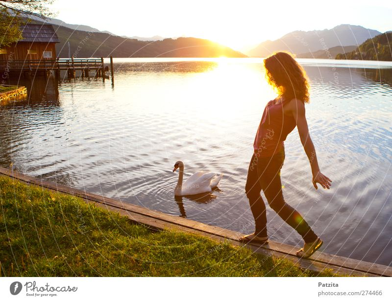 swan lake Woman Lake Swan Sunset Back-light Silhouette Dance Evening Dusk Light Sunbeam Water Going To go for a walk Leisure and hobbies Summer Nature Natural