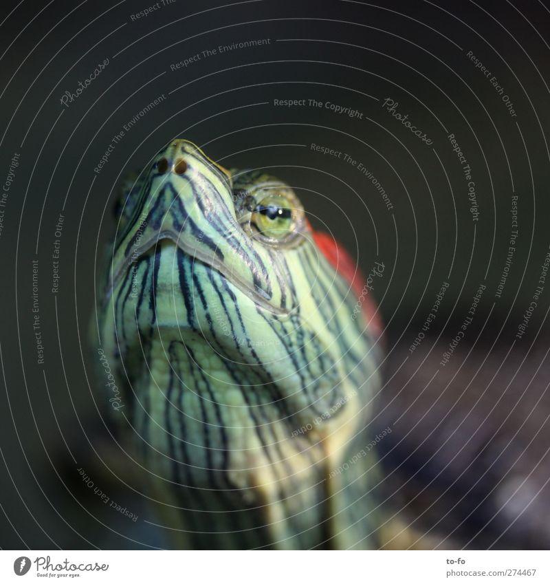 Animal Calm Animal face Serene Pride Wisdom Arrogant Turtle