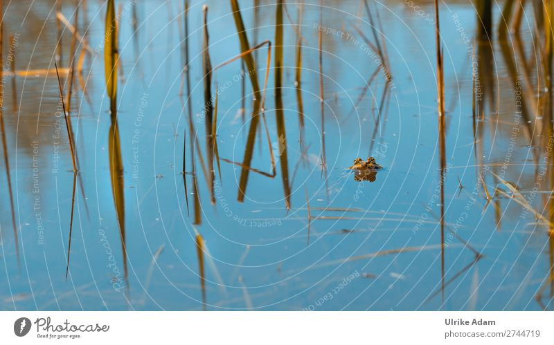 Nature Plant Blue Animal Environment Eyes Spring Natural Freedom Lake Swimming & Bathing Wet Lakeside Peace Common Reed Pond