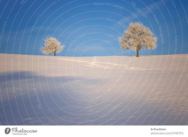 winter landscape Harmonious Calm Vacation & Travel Winter Snow Nature Sky Beautiful weather Ice Frost Tree Hill Mountain Looking Hiking Friendliness Fresh Cold