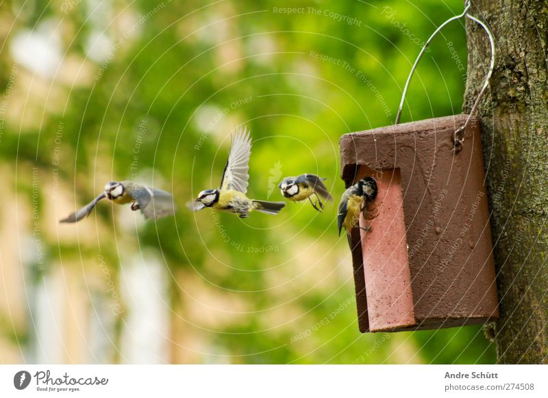 air show Nature Spring Beautiful weather Tree Garden Animal Bird 1 4 Flying Cute Happy Tit mouse Nest Tree trunk Colour photo Exterior shot Deserted