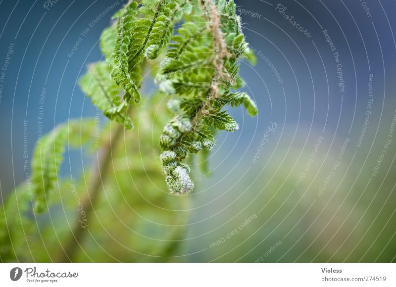 ...don't let your head hang down Nature Plant Fern Hang Growth Green Deploy coiled Colour photo Exterior shot Copy Space right Blur